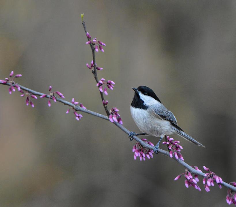 birdandpurple