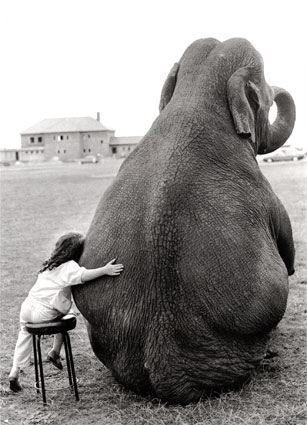elephantslove